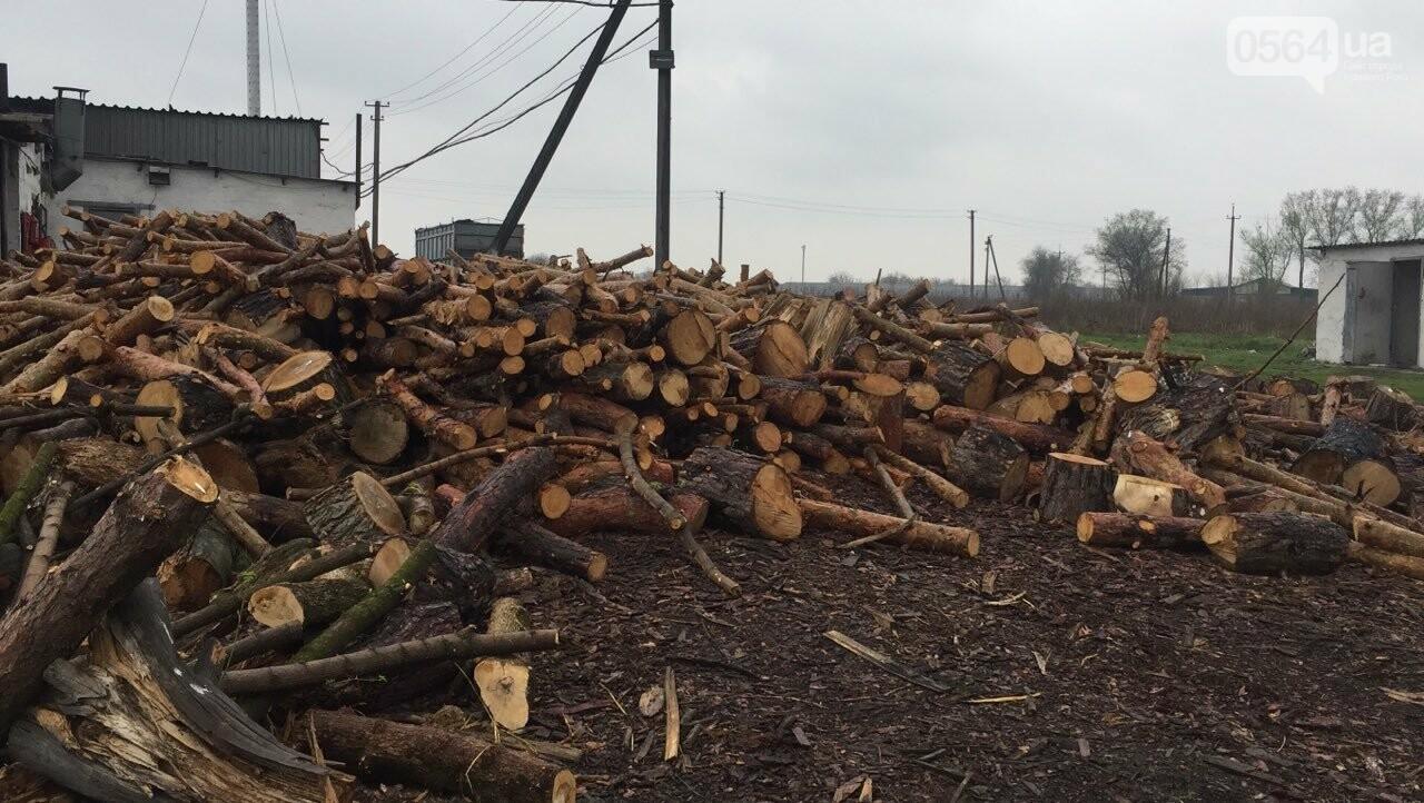 Прокуратура: В Кривом Роге лес уничтожали те, кто должен был его защищать (ФОТО), фото-9