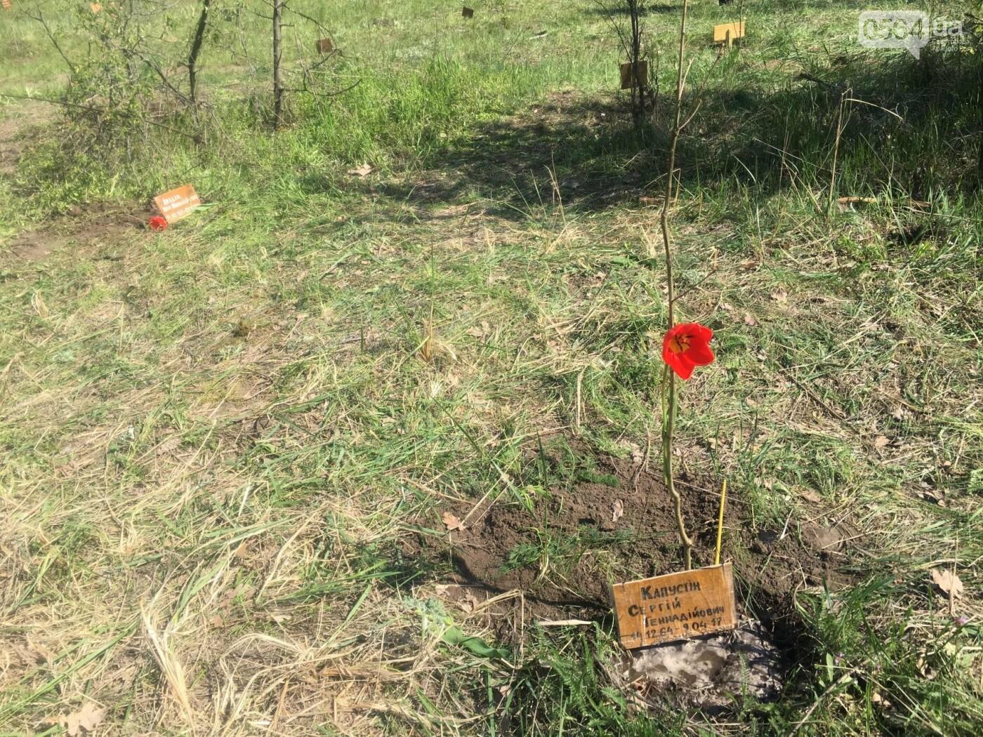 Как криворожане высаживали на Хортице дубраву в память о погибших Героях (ФОТО, ВИДЕО), фото-84
