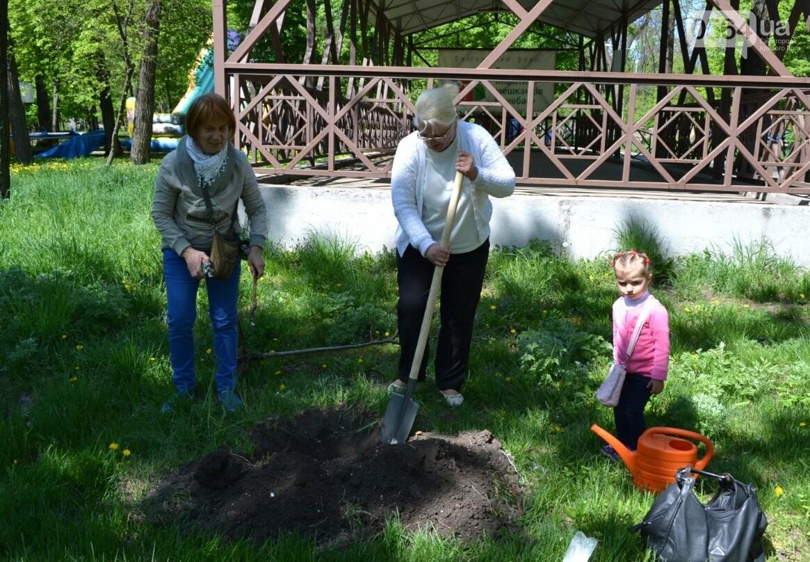 В парке Мершавцева криворожане посадили экзотические деревья (ФОТО), фото-4