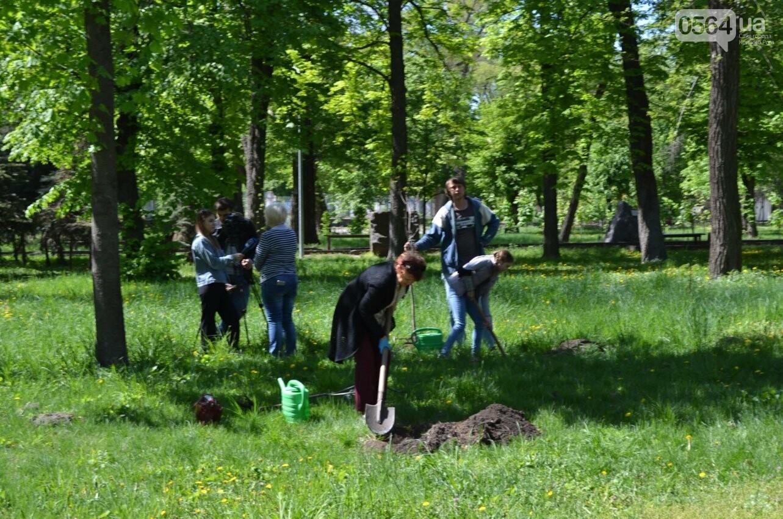 В парке Мершавцева криворожане посадили экзотические деревья (ФОТО), фото-11