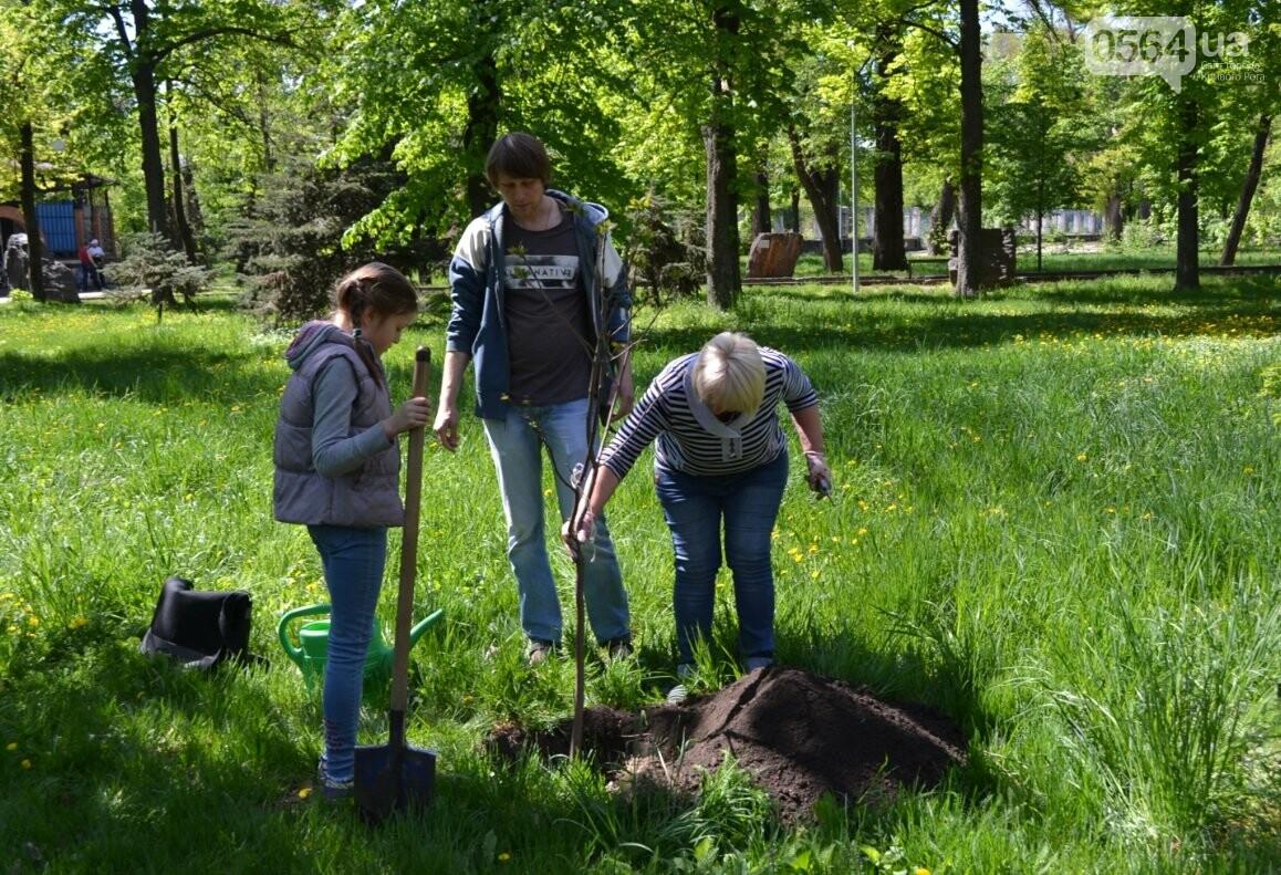 В парке Мершавцева криворожане посадили экзотические деревья (ФОТО), фото-7