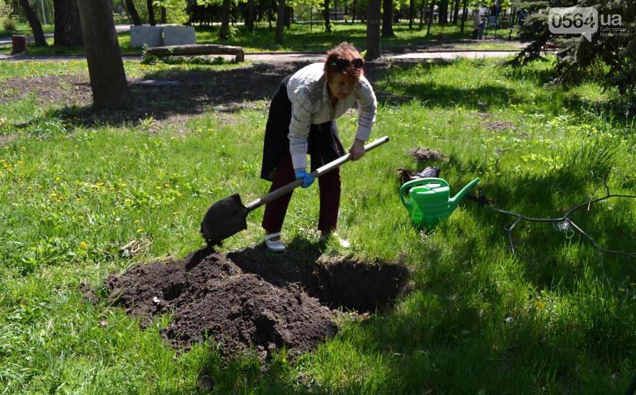 В парке Мершавцева криворожане посадили экзотические деревья (ФОТО), фото-12