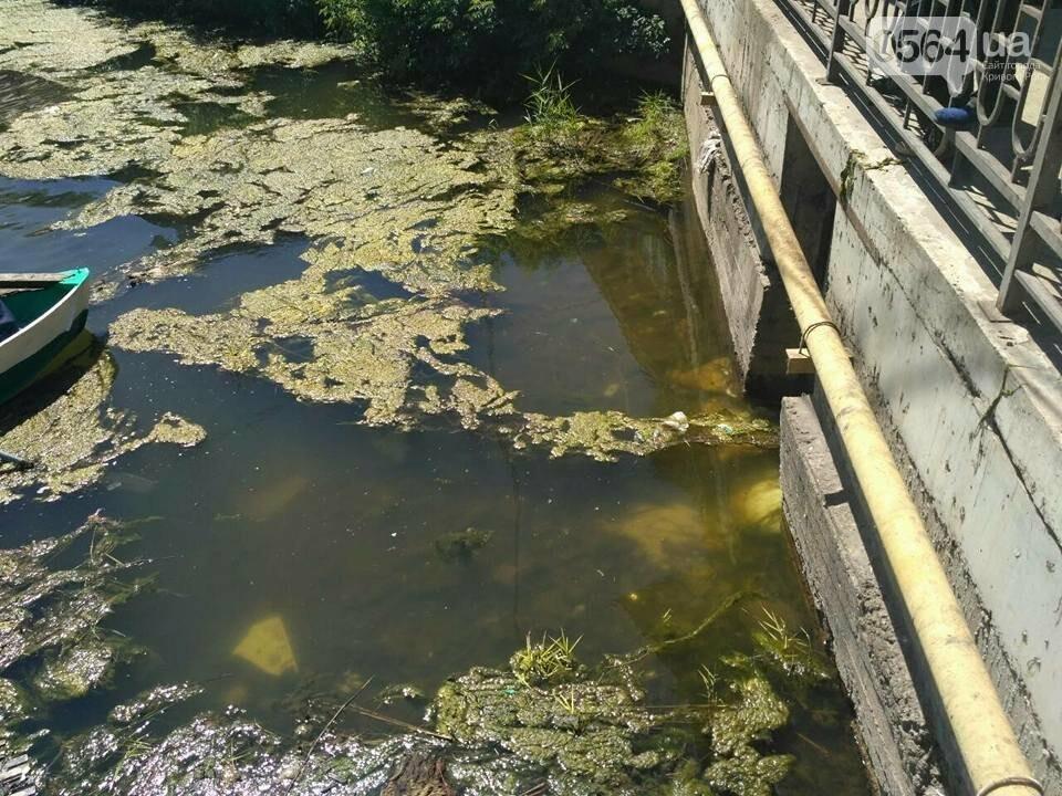В Кривом Роге расчищали водное зеркало от мусора, - ФОТО, фото-1