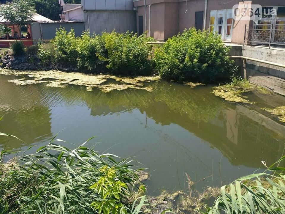 В Кривом Роге расчищали водное зеркало от мусора, - ФОТО, фото-7