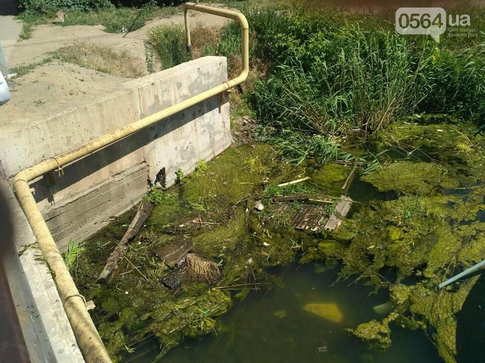 В Кривом Роге расчищали водное зеркало от мусора, - ФОТО, фото-3