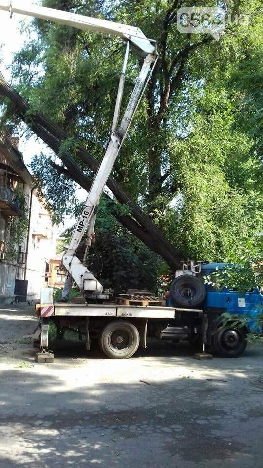 В Кривом Роге из-за ветра деревья рухнули на жилой дом и линию электропередач, - ФОТО, фото-2