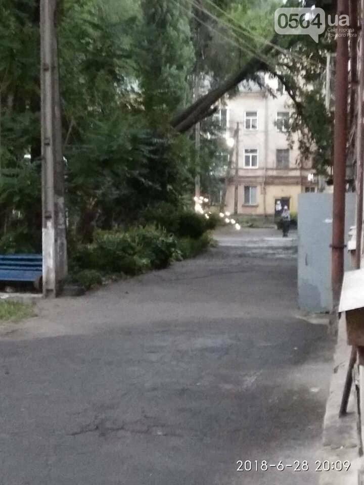 В Кривом Роге из-за ветра деревья рухнули на жилой дом и линию электропередач, - ФОТО, фото-1