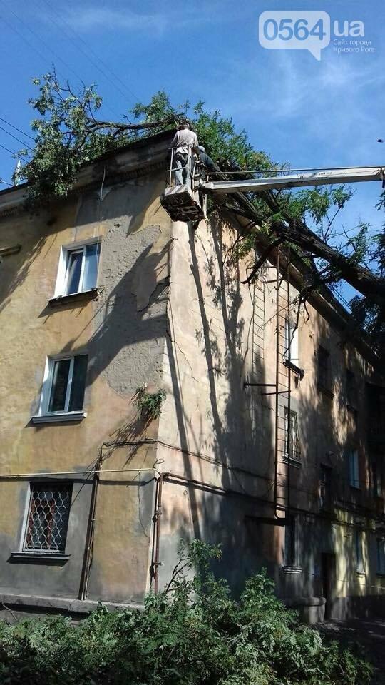 В Кривом Роге из-за ветра деревья рухнули на жилой дом и линию электропередач, - ФОТО, фото-3