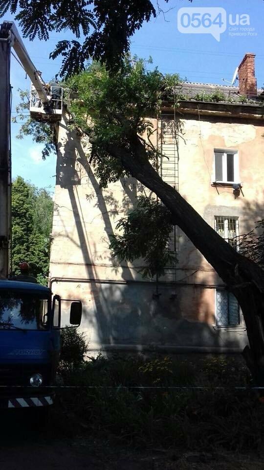 В Кривом Роге из-за ветра деревья рухнули на жилой дом и линию электропередач, - ФОТО, фото-4