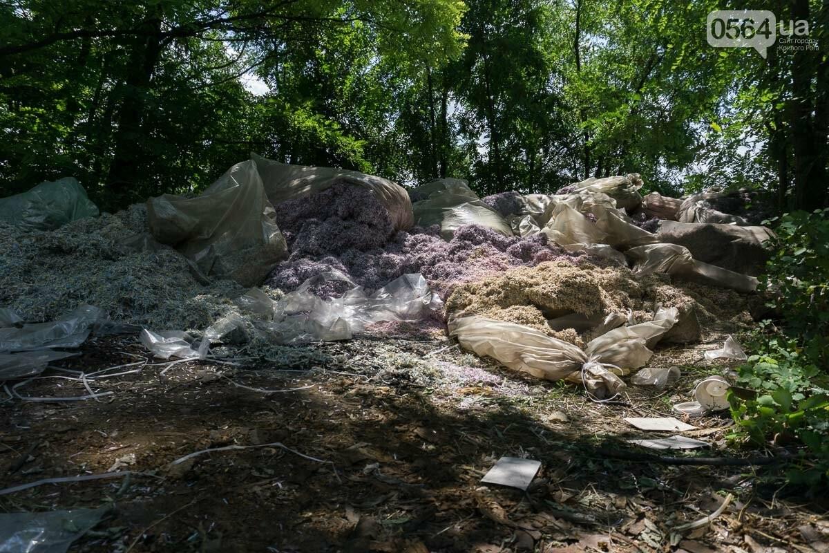 В лесополосе на Криворожском шоссе нашли десятки мешков с гривнами, - ФОТО, ВИДЕО, фото-2