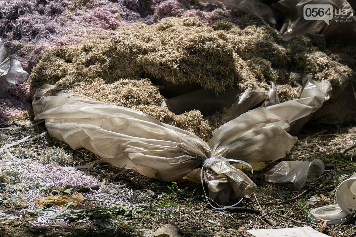 В лесополосе на Криворожском шоссе нашли десятки мешков с гривнами, - ФОТО, ВИДЕО, фото-1