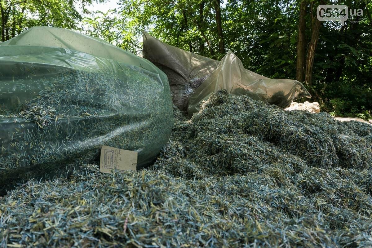 В лесополосе на Криворожском шоссе нашли десятки мешков с гривнами, - ФОТО, ВИДЕО, фото-4
