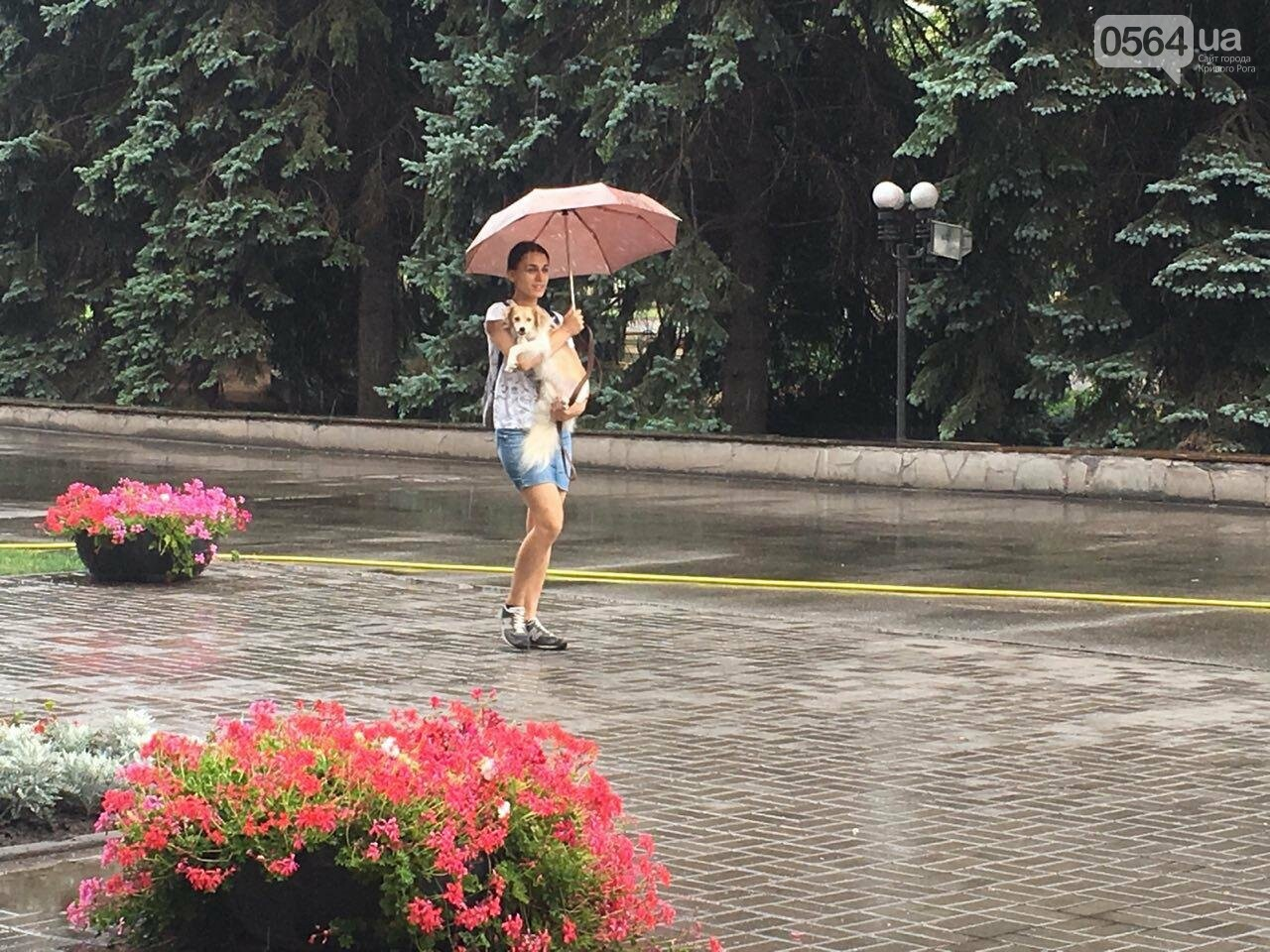 """В Кривом Роге под дождем проходит зоозащитная акция """"Украина - не живодерня!"""", - ФОТО, ВИДЕО, фото-2"""
