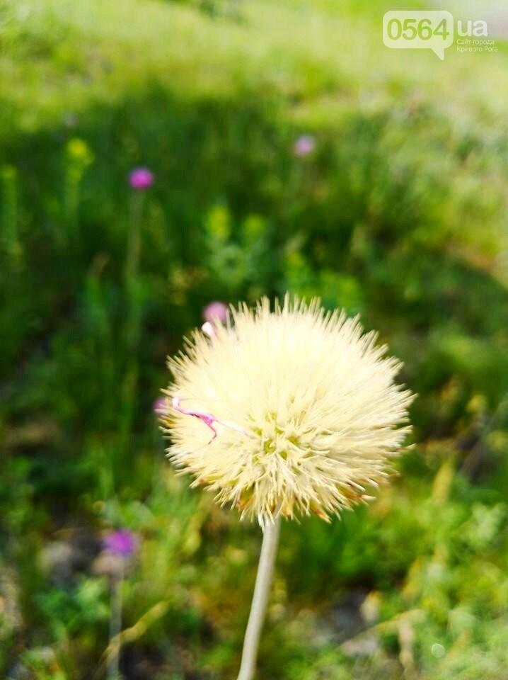 Красивый Кривой Рог: как отдохнуть, получить море позитива и заряд адреналина, - ФОТО, фото-9