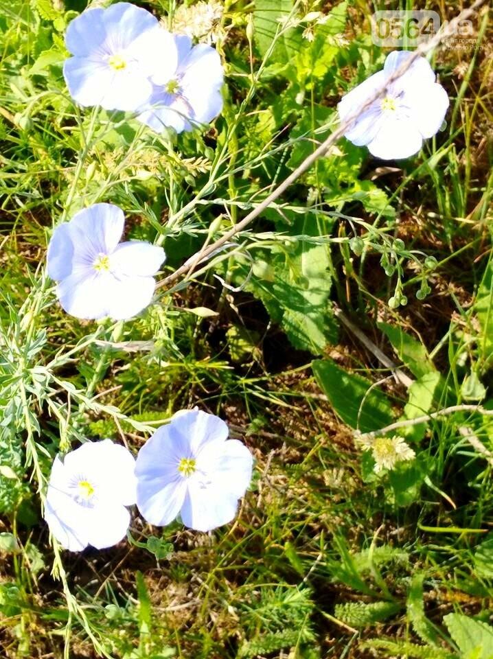 Красивый Кривой Рог: как отдохнуть, получить море позитива и заряд адреналина, - ФОТО, фото-22