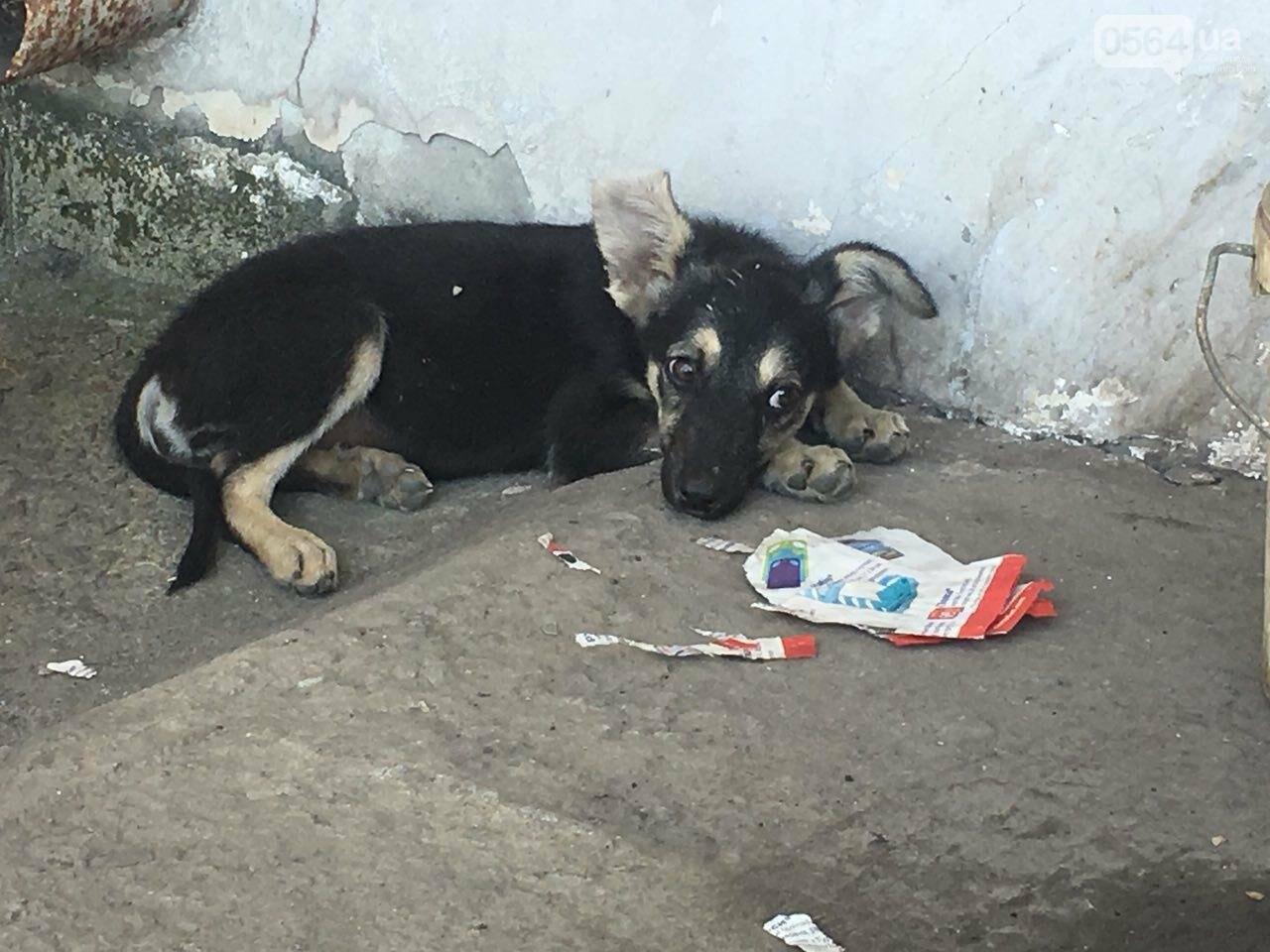 Криворожане не могут поверить, что массовое убийство животных на Заречном произошло из-за ночного лая собак, -ФОТО, фото-1
