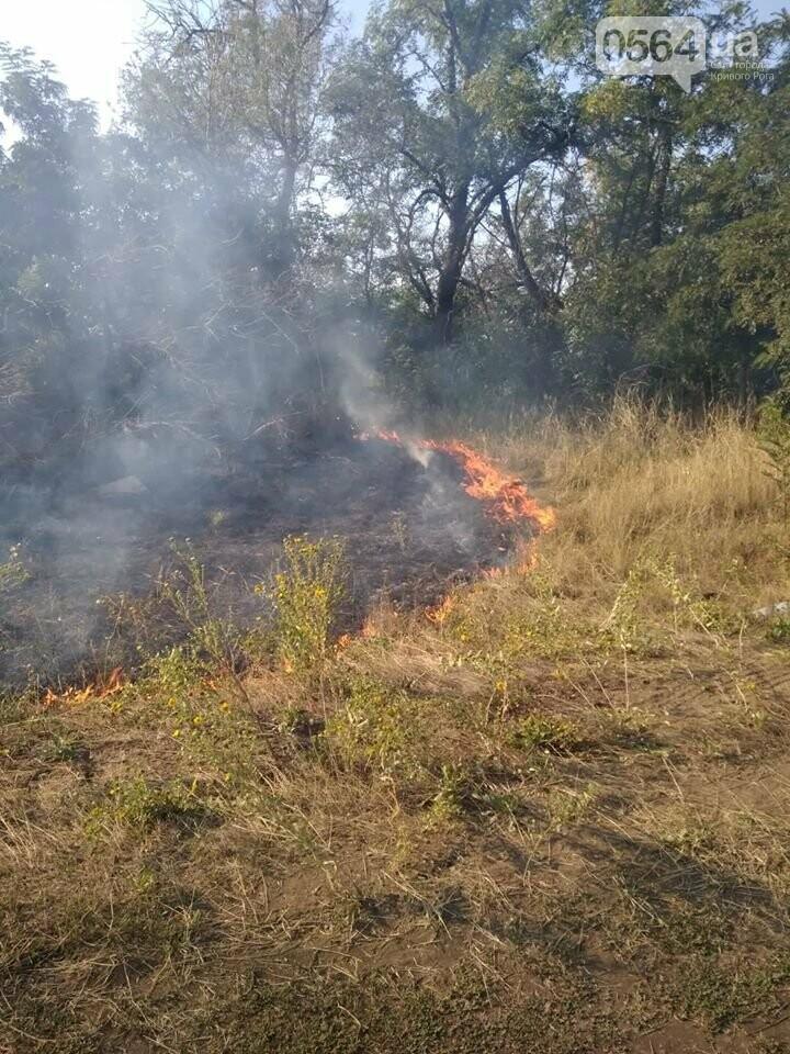 Пожар в Кривом Роге: горит лесополоса, в эпицентре возгорания - выгруженные из авто предметы, - ФОТО, фото-3
