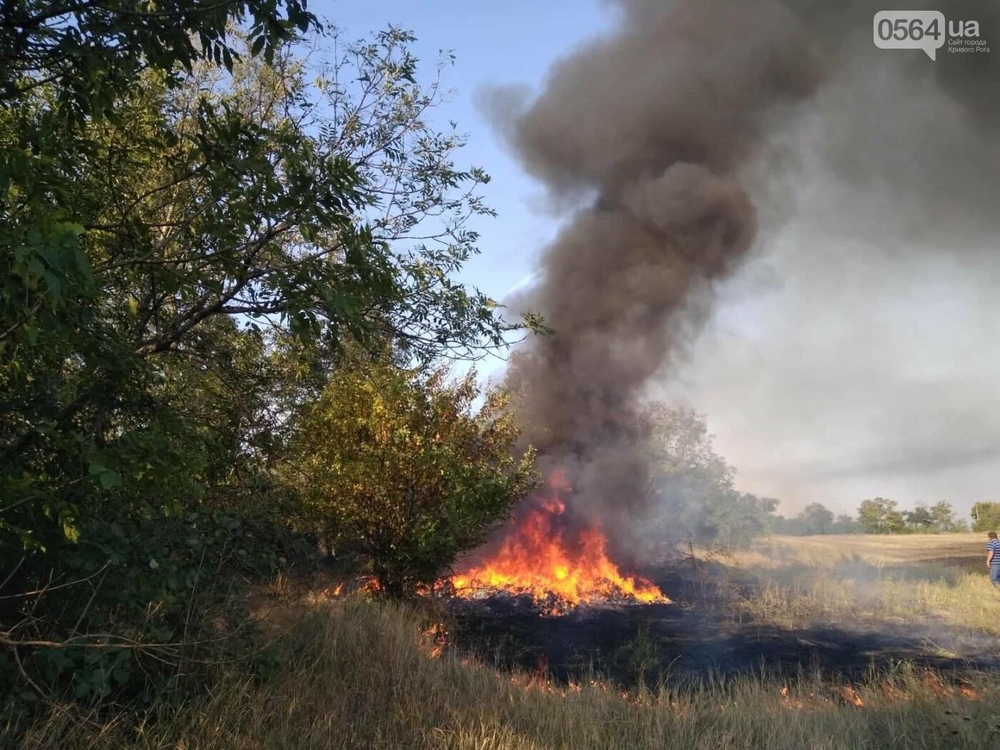 Пожар в Кривом Роге: горит лесополоса, в эпицентре возгорания - выгруженные из авто предметы, - ФОТО, фото-4