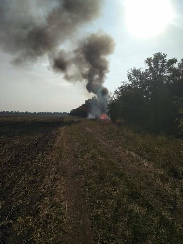 Пожар в Кривом Роге: горит лесополоса, в эпицентре возгорания - выгруженные из авто предметы, - ФОТО, фото-2