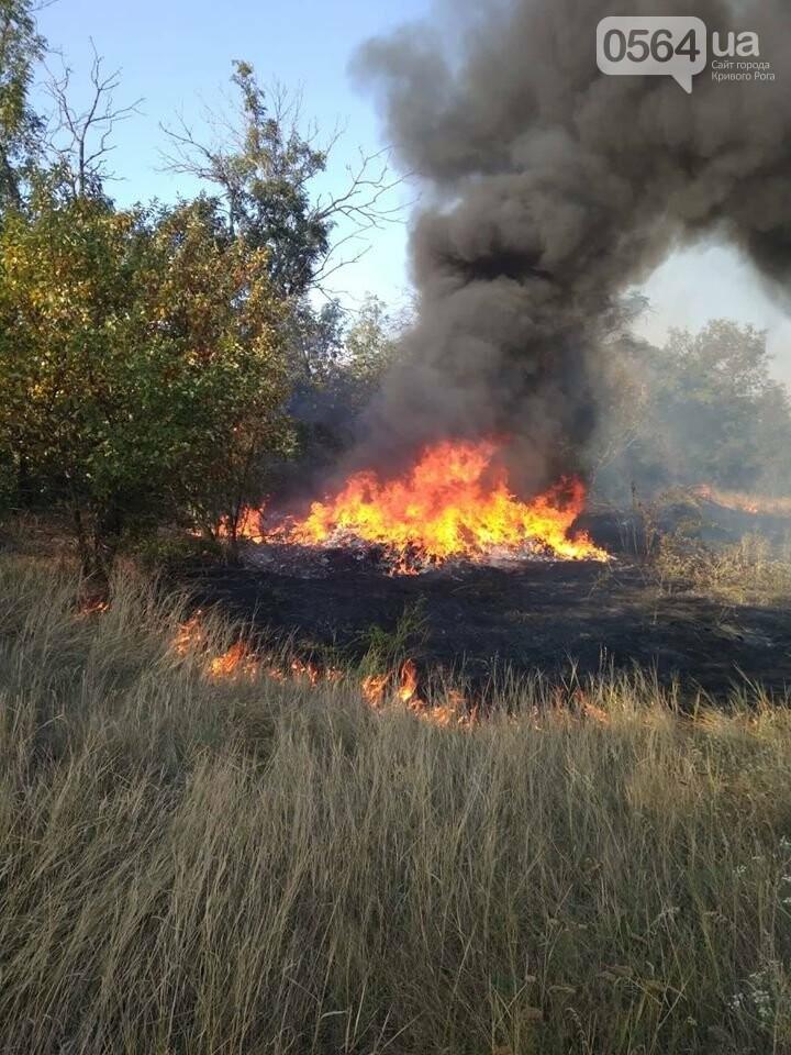 Пожар в Кривом Роге: горит лесополоса, в эпицентре возгорания - выгруженные из авто предметы, - ФОТО, фото-1
