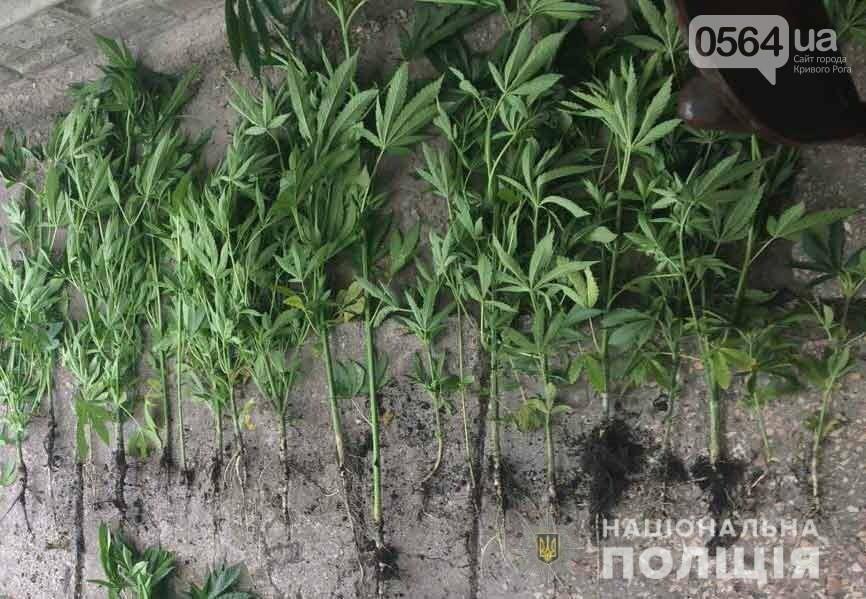 За 4 месяца на Днепропетровщине выявили более 20 тысяч кустов конопли и снотворного мака, - ФОТО , фото-1