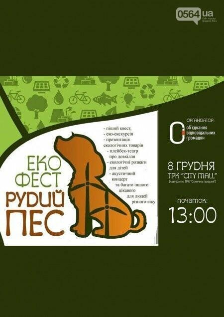 Эко-фестиваль, установление рекорда, дебатная школа: куда пойти криворожанам на выходных , фото-4