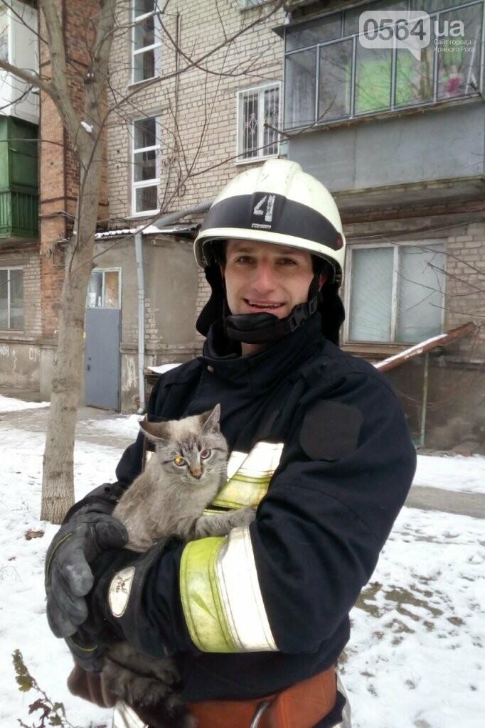 """На Днепропетровщине провели """"спецоперацию"""" по спасению кота, - ФОТО , фото-1"""