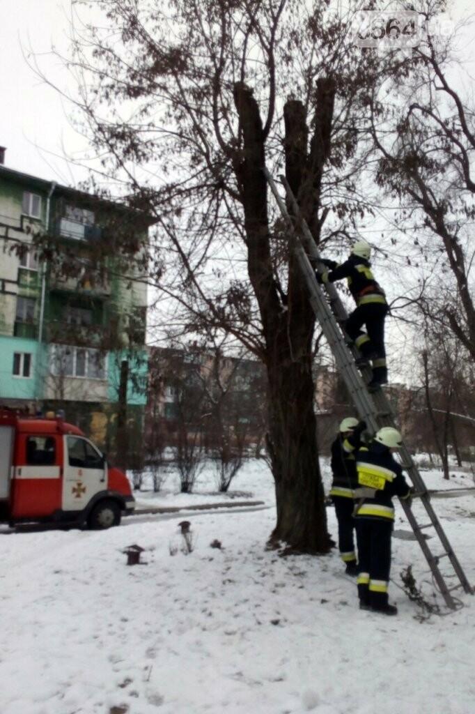 """На Днепропетровщине провели """"спецоперацию"""" по спасению кота, - ФОТО , фото-2"""