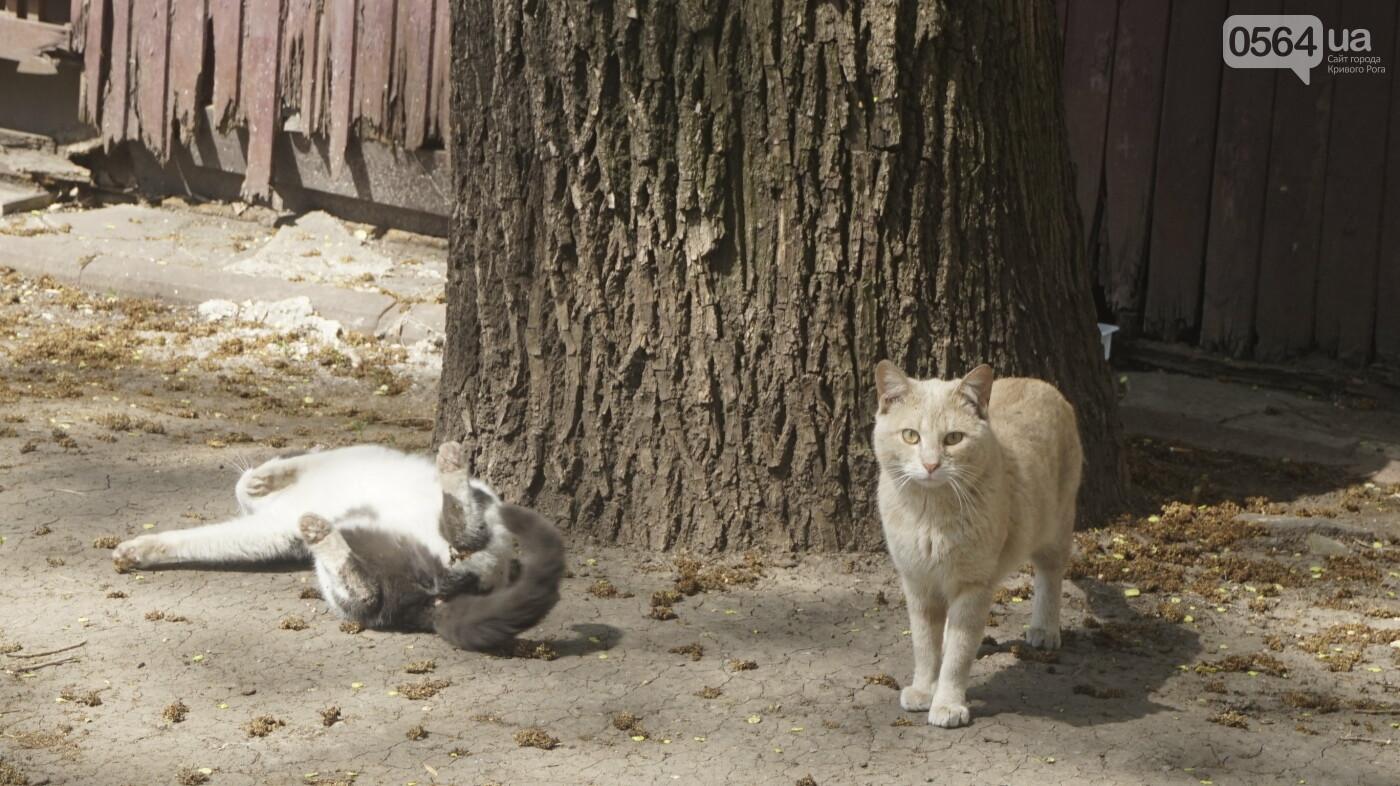 """Перед """"Еврофестом"""" в криворожском парке наводят порядок - работают без выходных, - ФОТО , фото-35"""