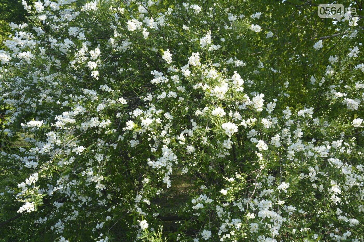 """Коллекция сирени, тюльпан """"Черный кофе"""", барбарис, - как выглядит Криворожский ботанический сад сегодня, - ФОТО, фото-21"""