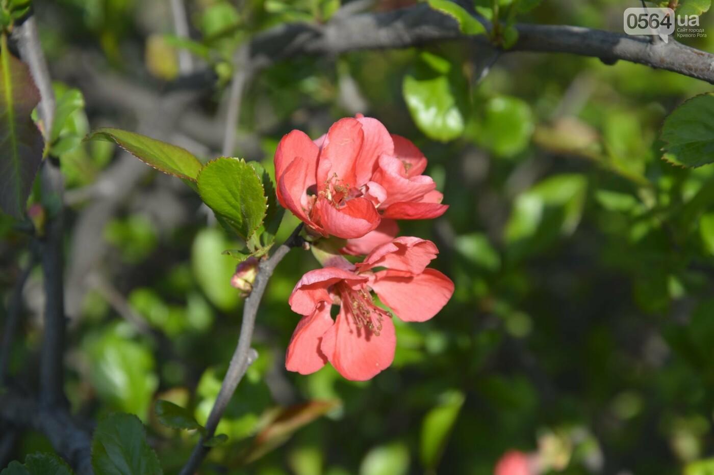 """Коллекция сирени, тюльпан """"Черный кофе"""", барбарис, - как выглядит Криворожский ботанический сад сегодня, - ФОТО, фото-22"""