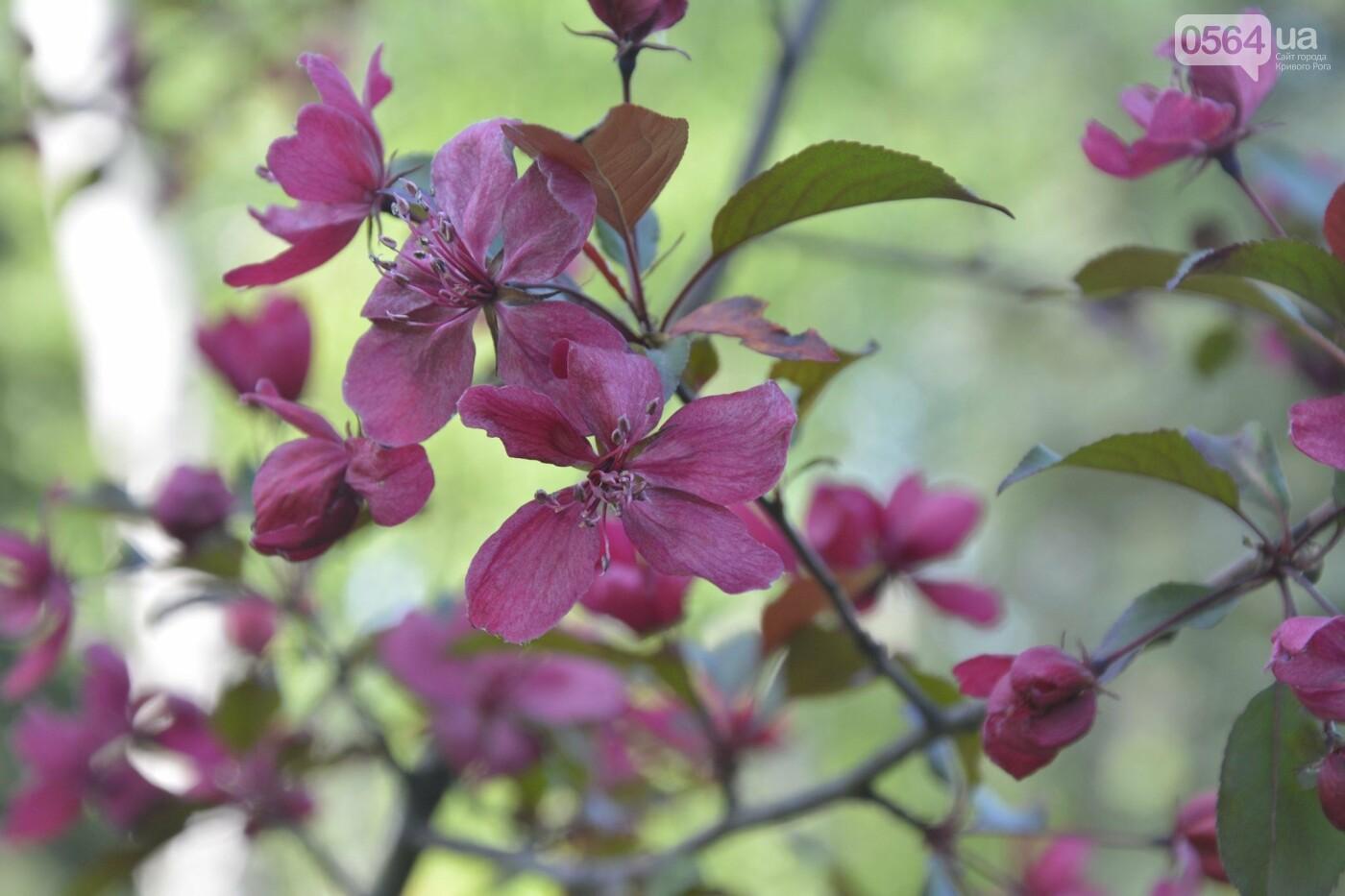 """Коллекция сирени, тюльпан """"Черный кофе"""", барбарис, - как выглядит Криворожский ботанический сад сегодня, - ФОТО, фото-3"""