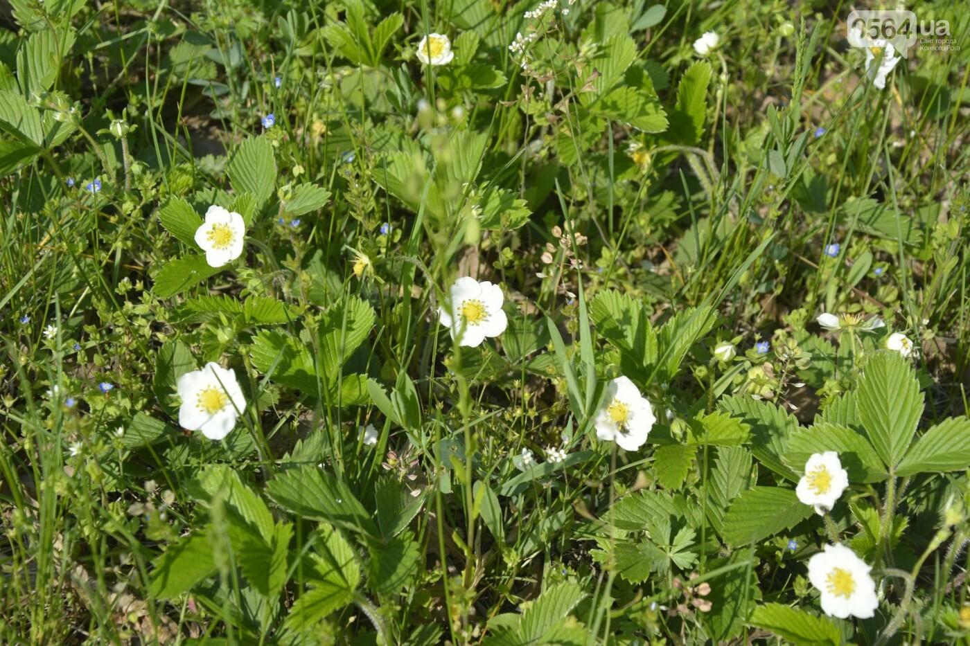 """Коллекция сирени, тюльпан """"Черный кофе"""", барбарис, - как выглядит Криворожский ботанический сад сегодня, - ФОТО, фото-27"""