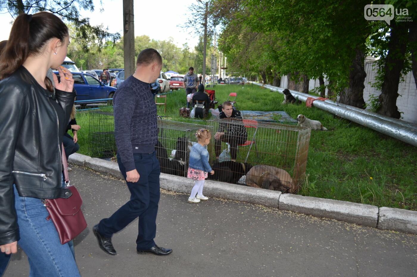 """""""Весна Кривбасса-2019"""": на выставке в Кривом Роге можно увидеть собак более 90 пород, - ФОТО, ВИДЕО, фото-10"""