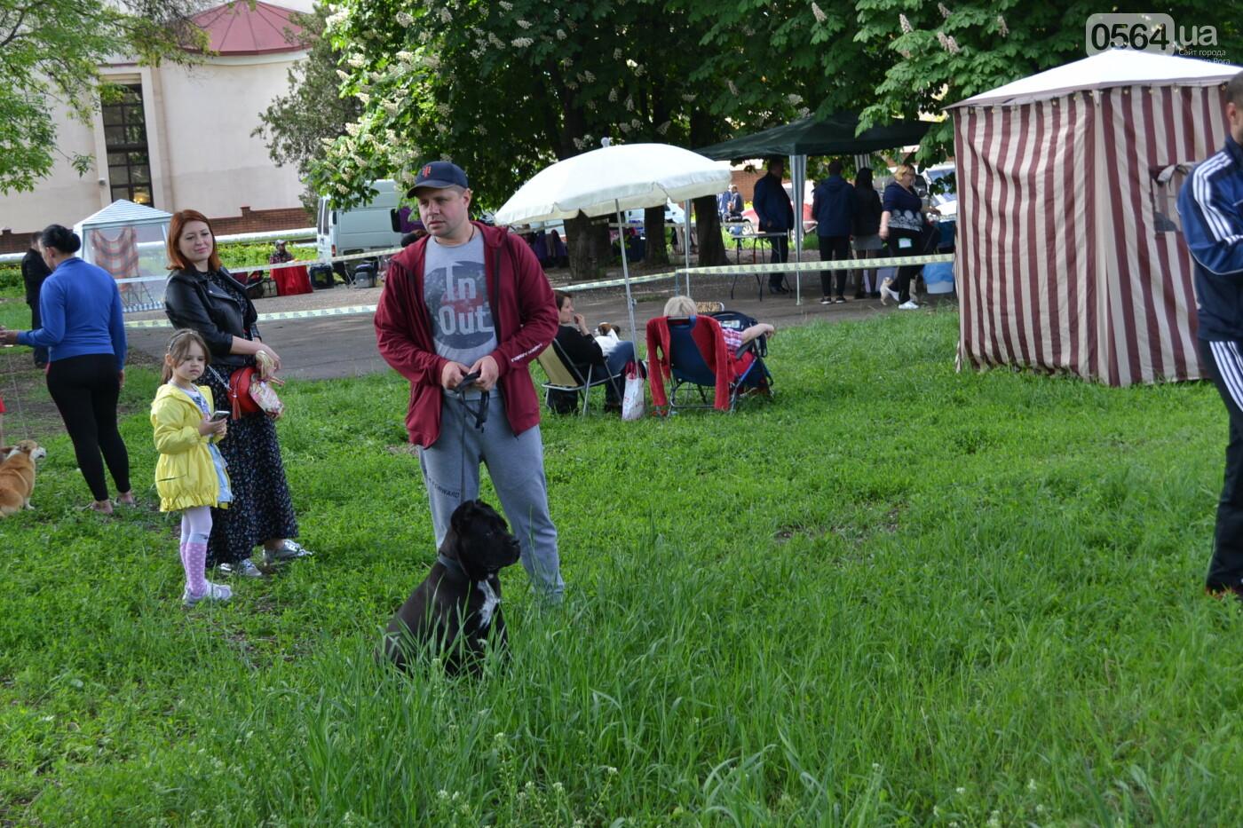"""""""Весна Кривбасса-2019"""": на выставке в Кривом Роге можно увидеть собак более 90 пород, - ФОТО, ВИДЕО, фото-12"""