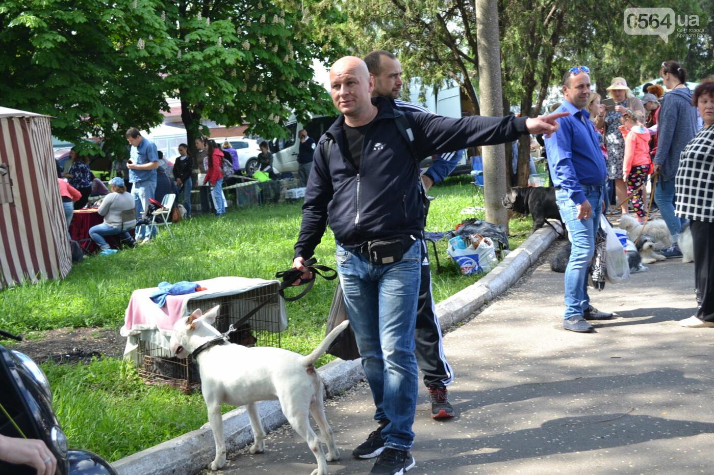 """""""Весна Кривбасса-2019"""": на выставке в Кривом Роге можно увидеть собак более 90 пород, - ФОТО, ВИДЕО, фото-17"""