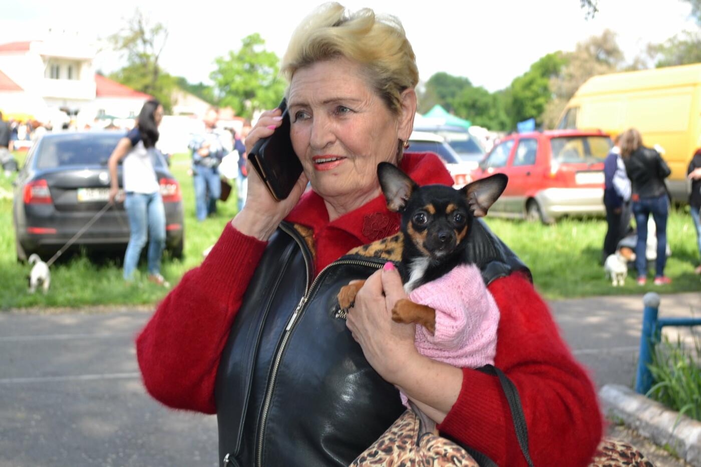 """""""Весна Кривбасса-2019"""": на выставке в Кривом Роге можно увидеть собак более 90 пород, - ФОТО, ВИДЕО, фото-6"""