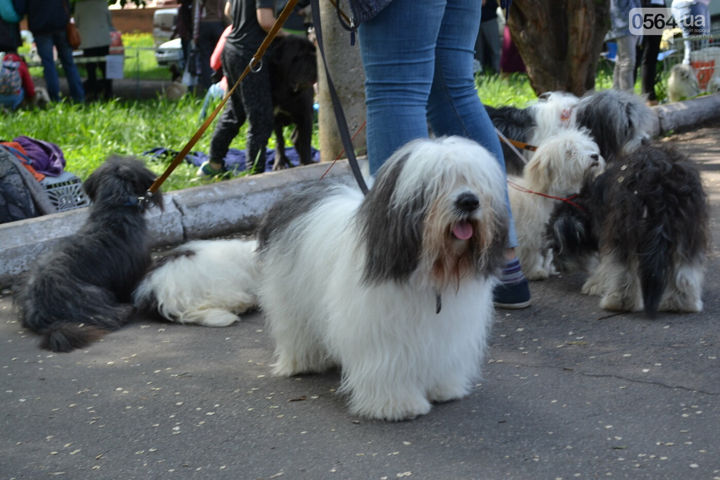 """""""Весна Кривбасса-2019"""": на выставке в Кривом Роге можно увидеть собак более 90 пород, - ФОТО, ВИДЕО, фото-8"""