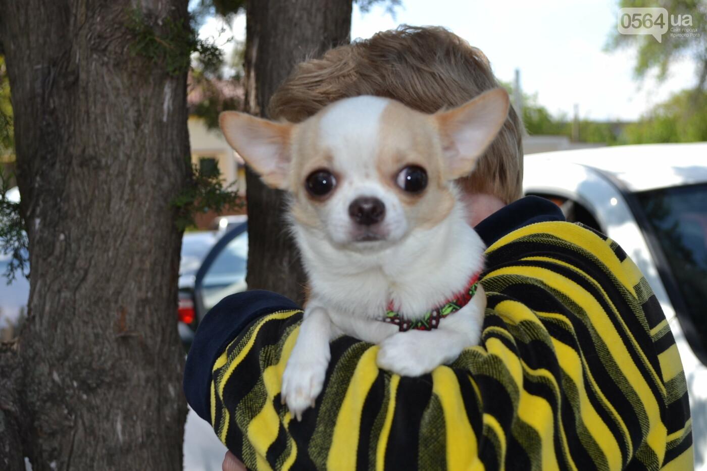 """""""Весна Кривбасса-2019"""": на выставке в Кривом Роге можно увидеть собак более 90 пород, - ФОТО, ВИДЕО, фото-7"""