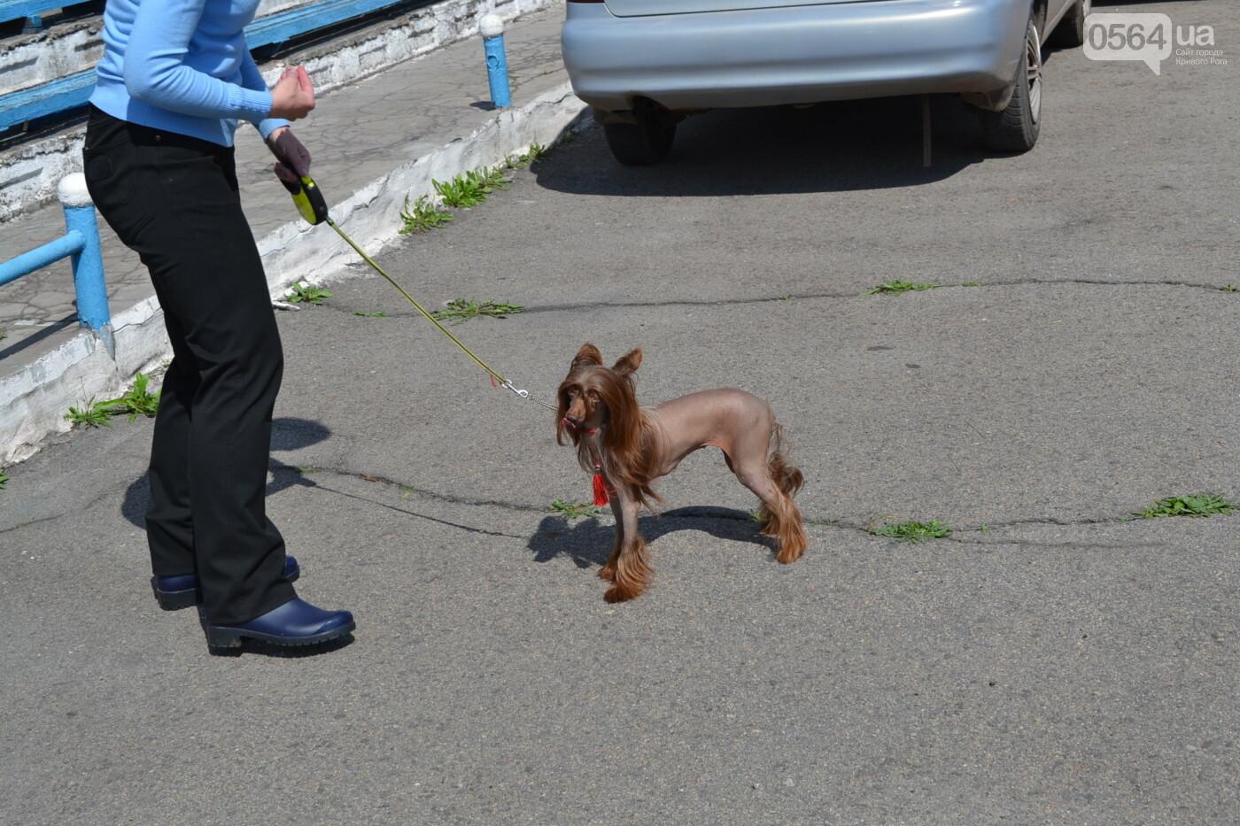 """""""Весна Кривбасса-2019"""": на выставке в Кривом Роге можно увидеть собак более 90 пород, - ФОТО, ВИДЕО, фото-19"""