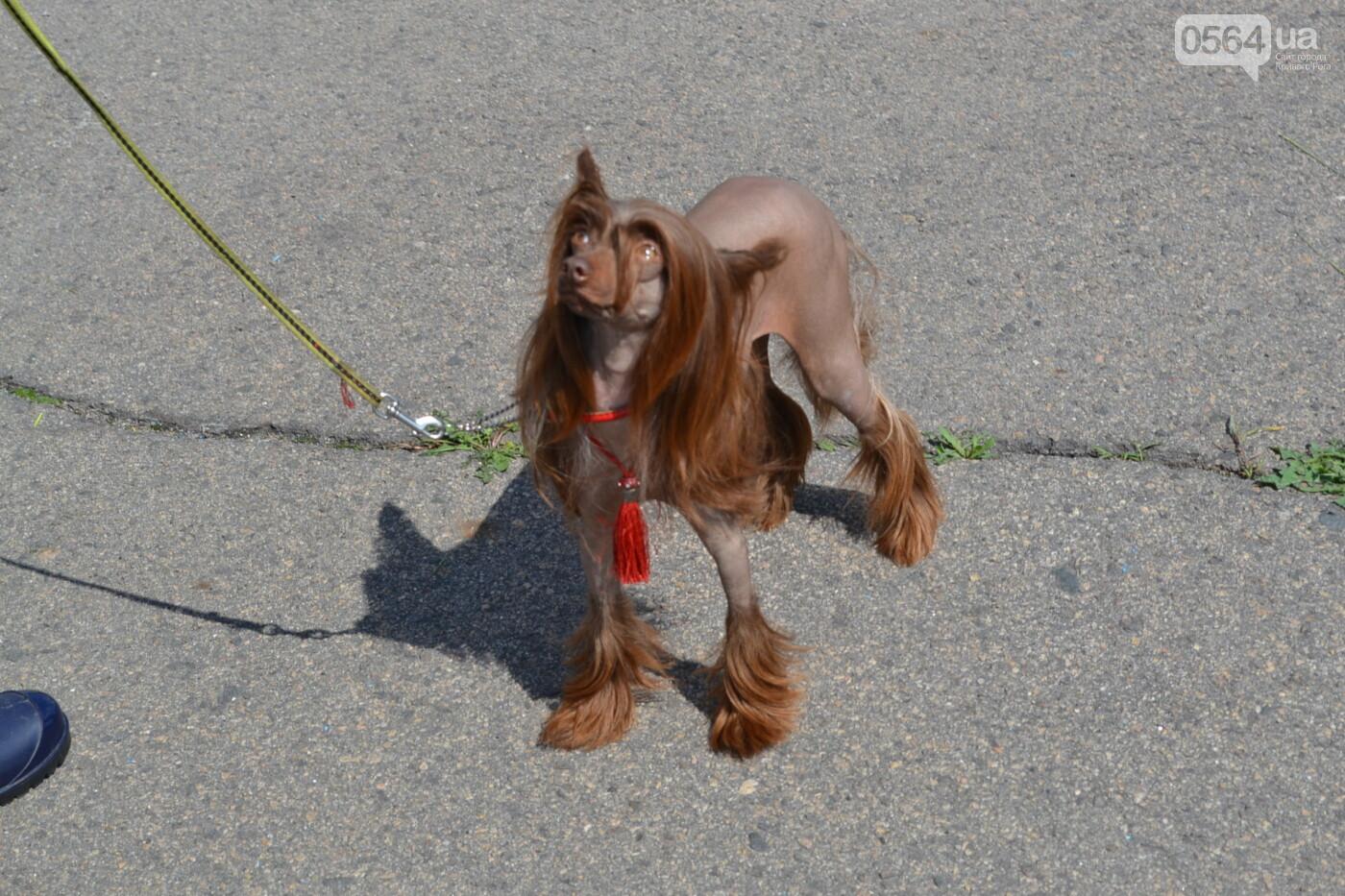 """""""Весна Кривбасса-2019"""": на выставке в Кривом Роге можно увидеть собак более 90 пород, - ФОТО, ВИДЕО, фото-18"""