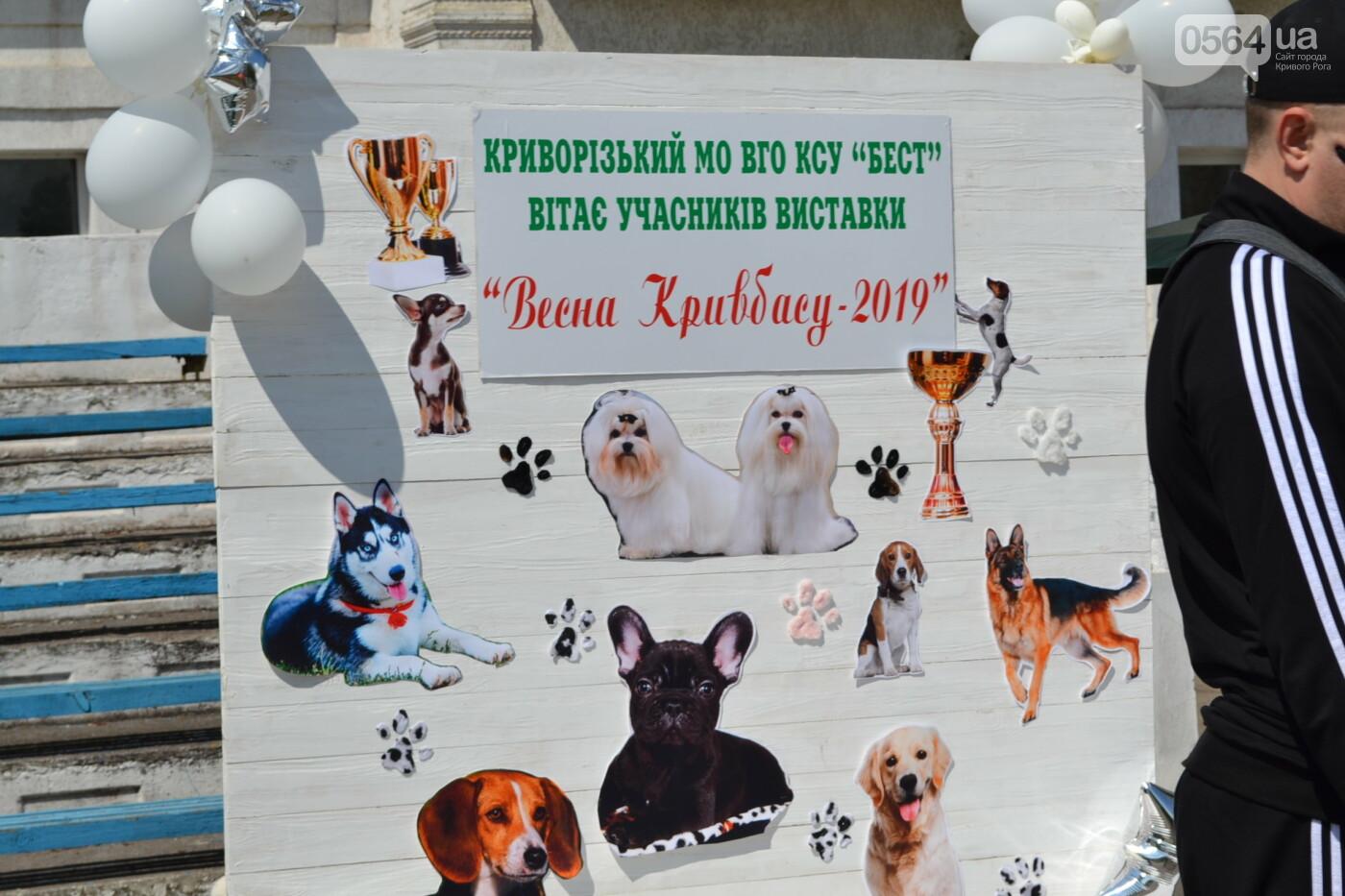 """""""Весна Кривбасса-2019"""": на выставке в Кривом Роге можно увидеть собак более 90 пород, - ФОТО, ВИДЕО, фото-37"""