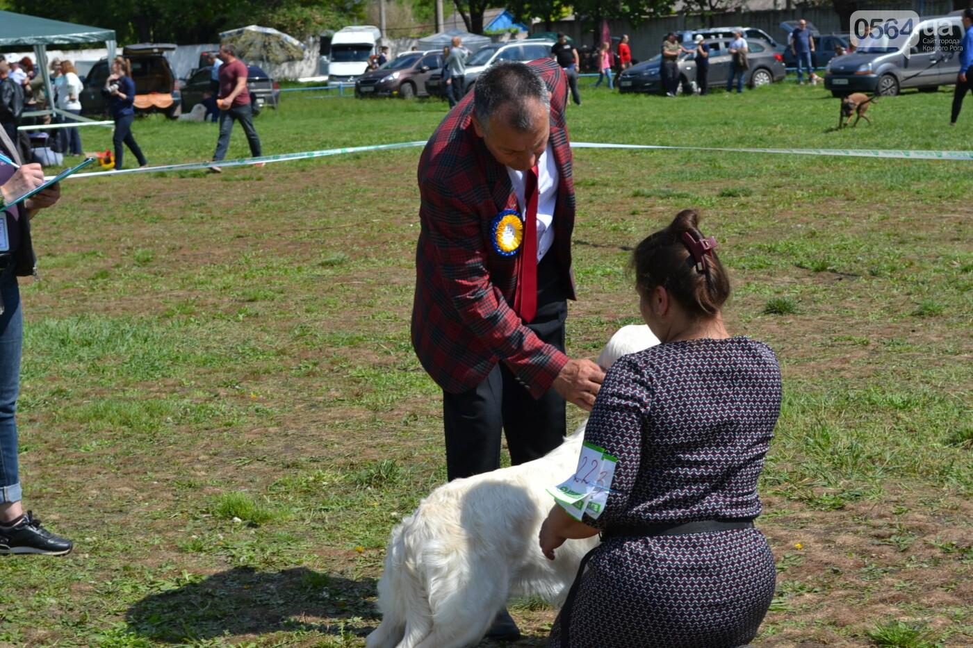 """""""Весна Кривбасса-2019"""": на выставке в Кривом Роге можно увидеть собак более 90 пород, - ФОТО, ВИДЕО, фото-24"""