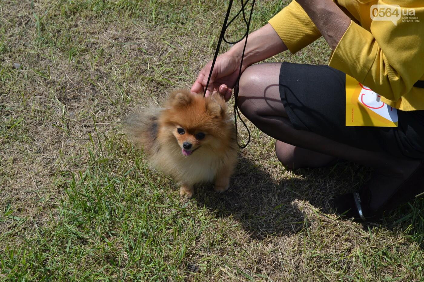"""""""Весна Кривбасса-2019"""": на выставке в Кривом Роге можно увидеть собак более 90 пород, - ФОТО, ВИДЕО, фото-36"""