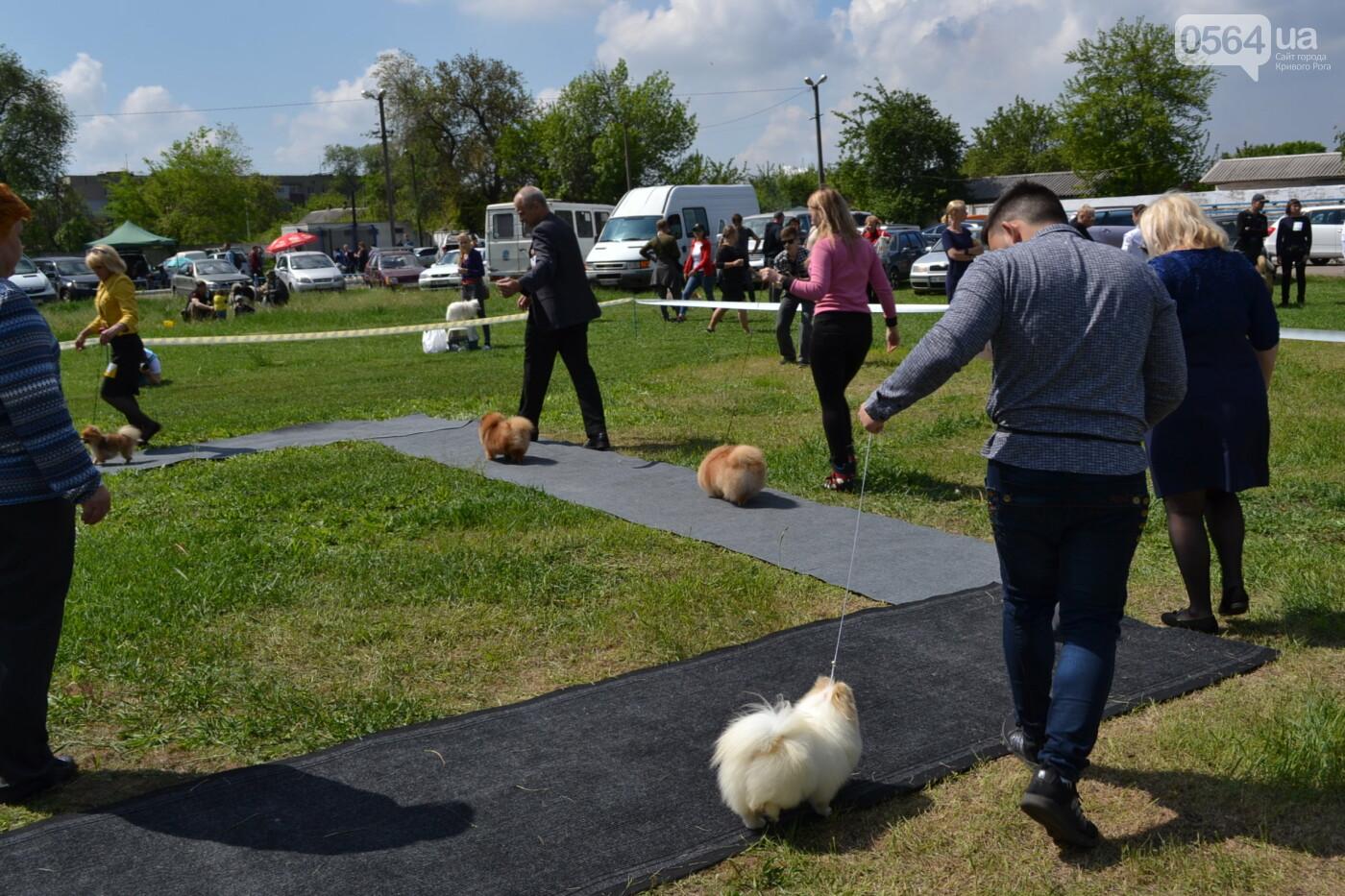 """""""Весна Кривбасса-2019"""": на выставке в Кривом Роге можно увидеть собак более 90 пород, - ФОТО, ВИДЕО, фото-33"""