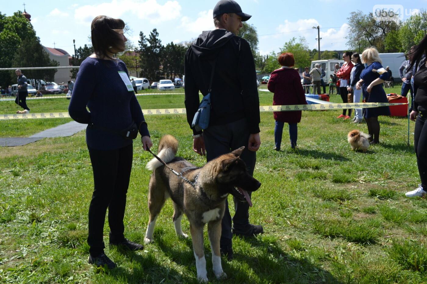 """""""Весна Кривбасса-2019"""": на выставке в Кривом Роге можно увидеть собак более 90 пород, - ФОТО, ВИДЕО, фото-31"""