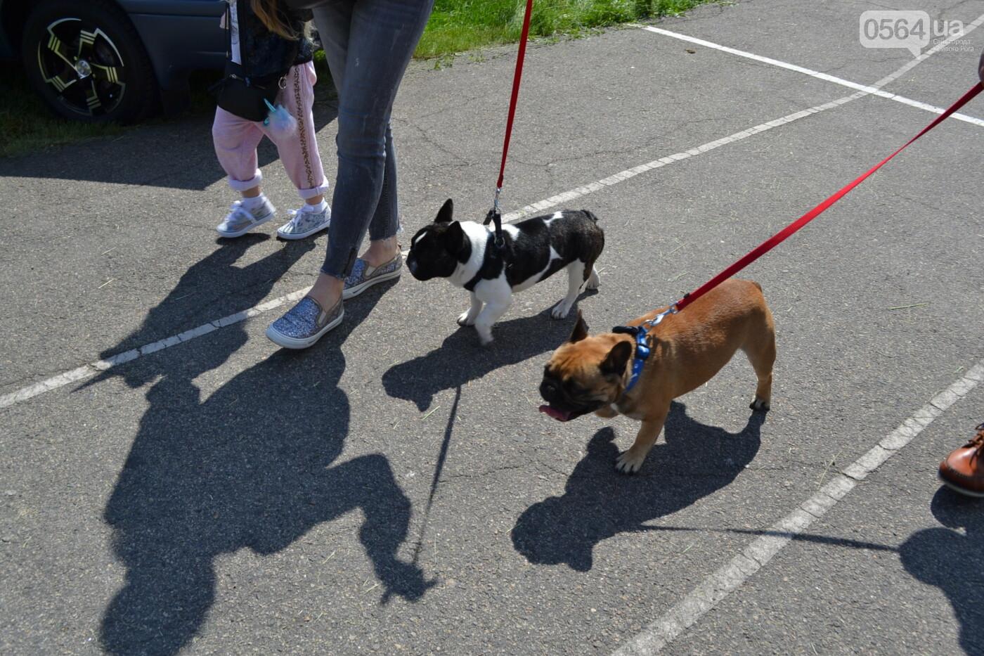 """""""Весна Кривбасса-2019"""": на выставке в Кривом Роге можно увидеть собак более 90 пород, - ФОТО, ВИДЕО, фото-32"""