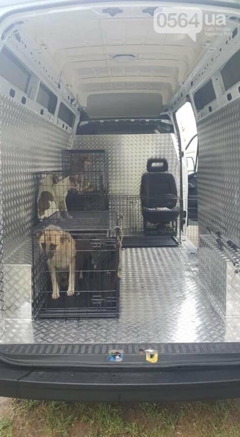 Для перевозки бездомных животных в Кривом Роге приобрели спецавтомобиль, - ФОТО, фото-2