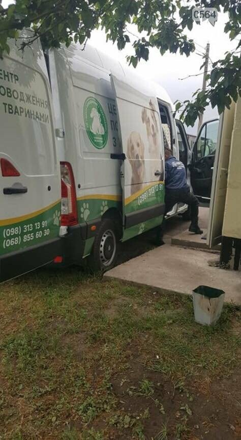 Для перевозки бездомных животных в Кривом Роге приобрели спецавтомобиль, - ФОТО, фото-3