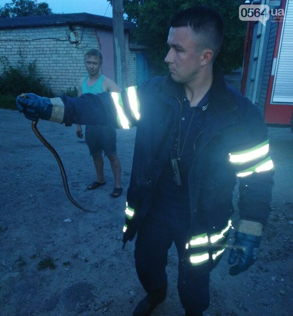 Змея спряталась в машине криворожанина, - ФОТО , фото-1